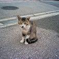 しょぼくれたネコ